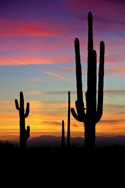 A Southwest Saguaro Sunset Throw Pillow for Sale by Saija Lehtonen