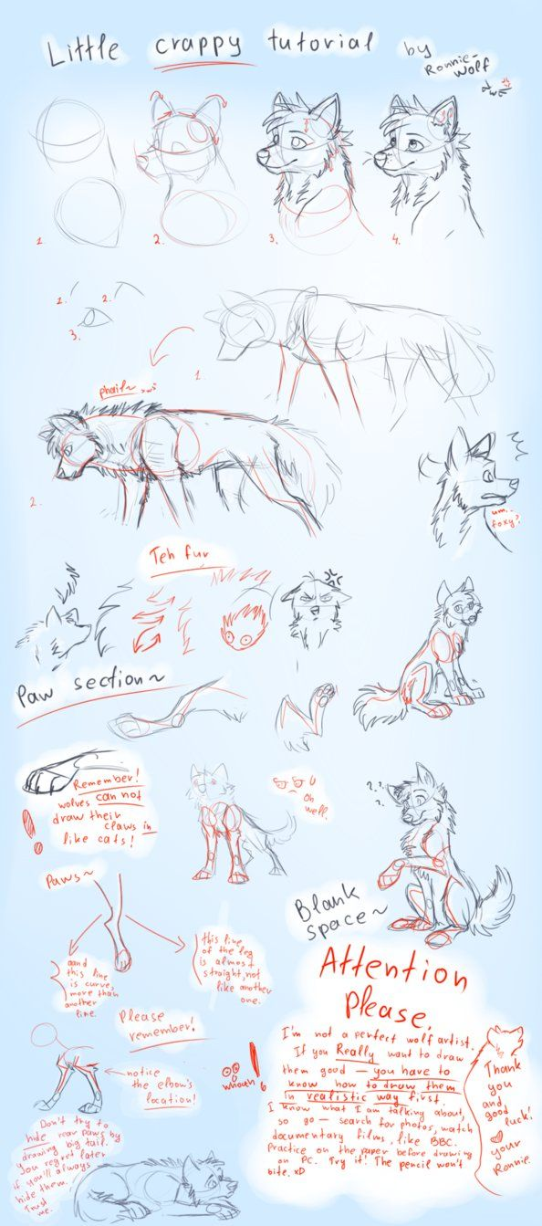 How To Draw Wolves  How To Draw A Wolf By Ronniewolf
