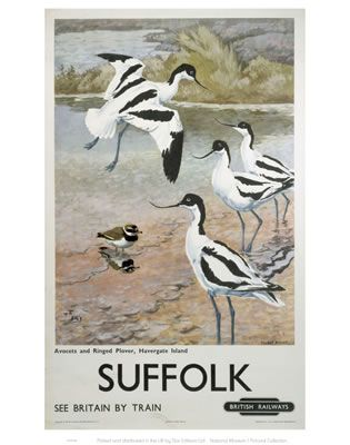 #Suffolk #Avocets #Vintage #Rail #Railway #Train #Poster #Posters #Prints #Print #Art #UK #Britain #British #Old #Travel #Suffolk www.vintagerailposters.co.uk