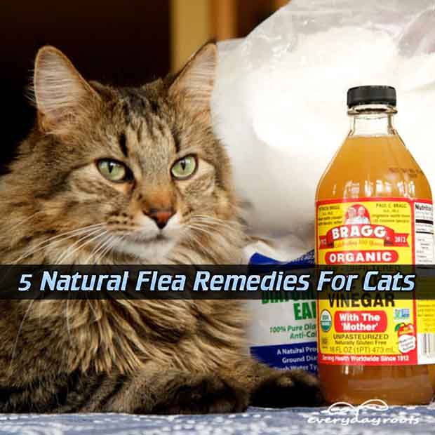 Natural Flea Control For Cats Home Remedies