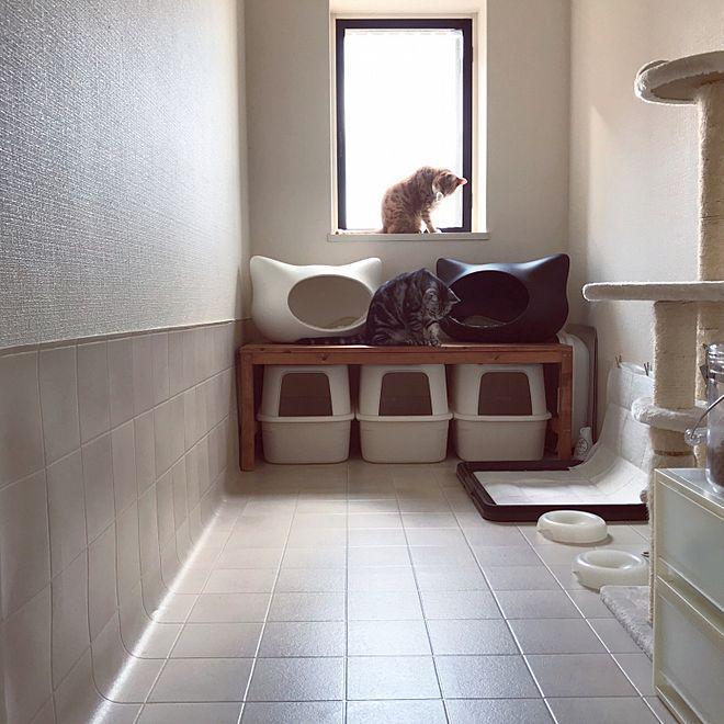 玄関 入り口 猫部屋 多頭飼い 手作り家具 ねこ などのインテリア実例 2017 10 25 09 40 39 Roomclip ルームクリップ 猫部屋 手作り家具 インテリア