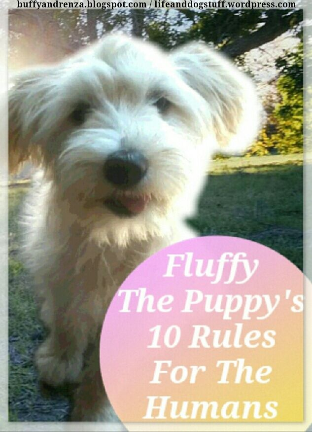 Check out blog post Fluffy The Puppy's 10 Rules For The Humans. Fluffy my puppy lays down the law. She has already written a brilliant world domination plan. There is no stopping her. Hail Queen Fluffy! #dogs #puppy #blog