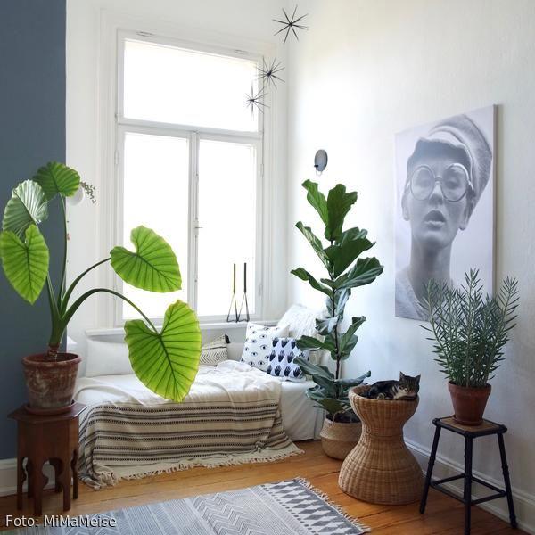 140 besten Urban Jungle Wohnen mit Pflanzen Bilder auf Pinterest - pflanzen dekoration wohnzimmer