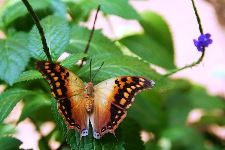 fly like a batterfly