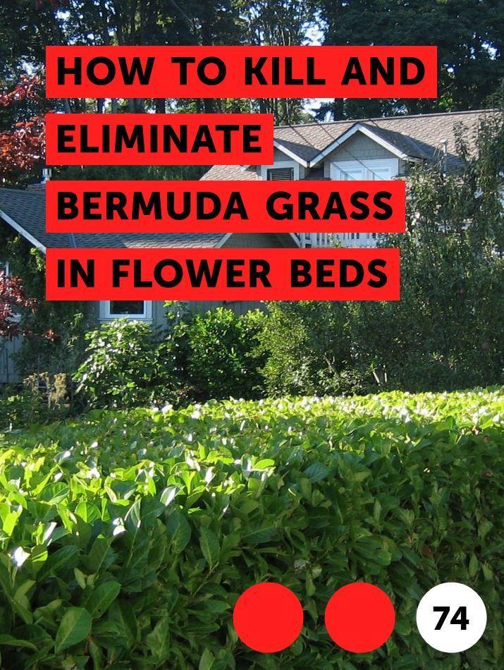 How To Get Rid Of Bermuda Grass In Vegetable Garden