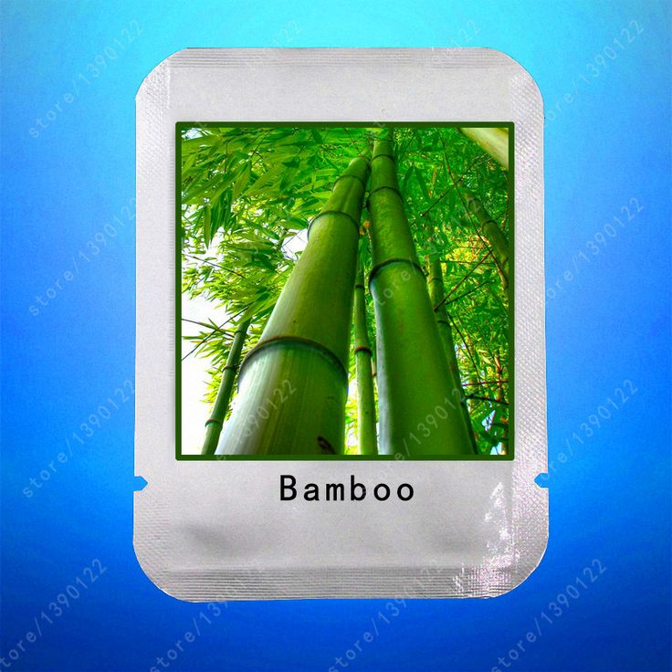 20seeds/bag moso bamboo seeds,giant bamboo seeds,Perennial Ornamental Plants Natural growth for home Garden planting