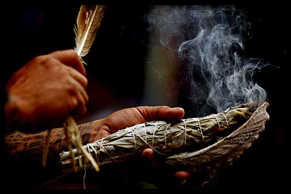 """White Sage (Salvia apiana): Sage is one of the most efficient plants in order to combat cases in which the body of a person is possessed by an evil entity that obsesses the person and even makes him demented."""" - Samael Aun Weor, Esoteric Medicine and Practical Magic"""