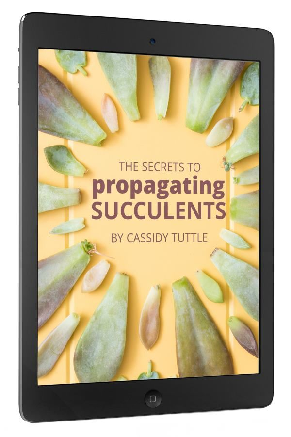 23 best gardening succulent xeriscaping e books images on succulents and sunshine e books fandeluxe Choice Image