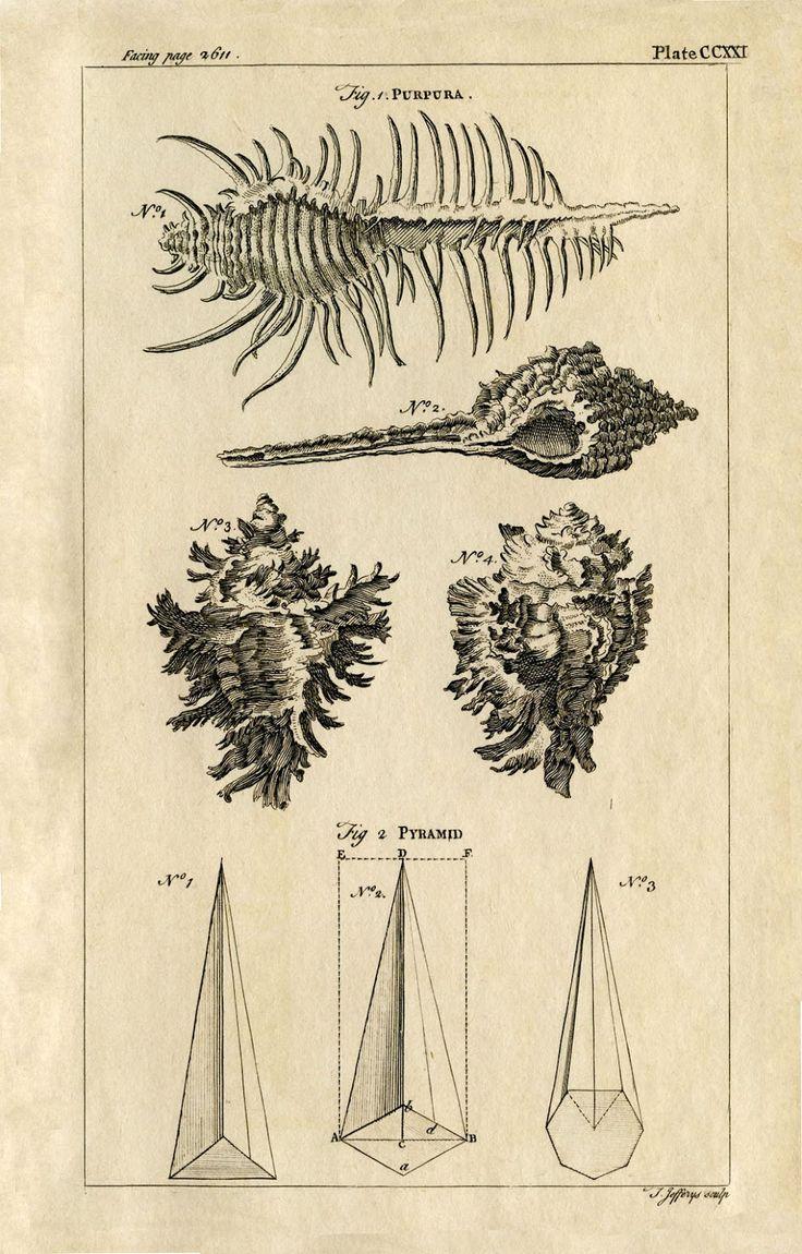 156 best design resources images on pinterest free printables