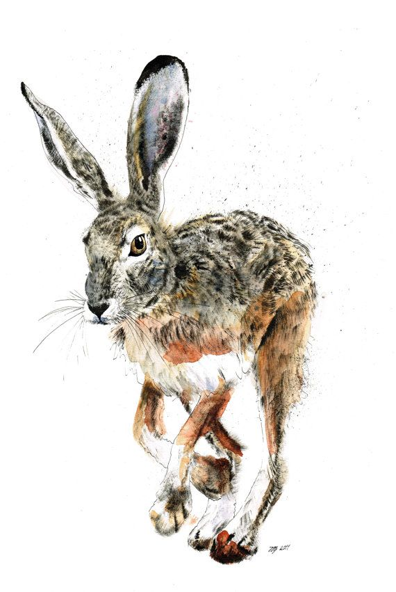 Limited Edition A3 Print of a Hare by jina11 on Etsy, $25.00