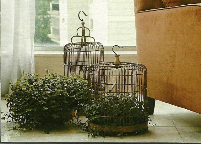 Dena Interiores  : 3 Plantas Que Melhoram a Energia da Casa