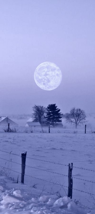 Periwinkle winter