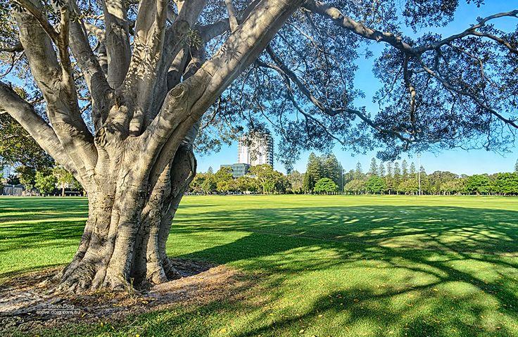 trees @ #Como #Perth #thisisWA