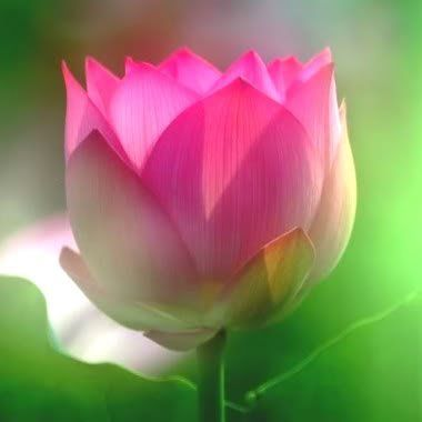 1000 Images About Flowers By Mendel C On Pinterest