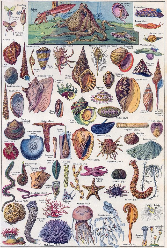 Marine-life chart. Vintage, undated