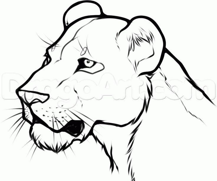Line Art Jungle Animals : How to draw a lioness head step lions pinterest