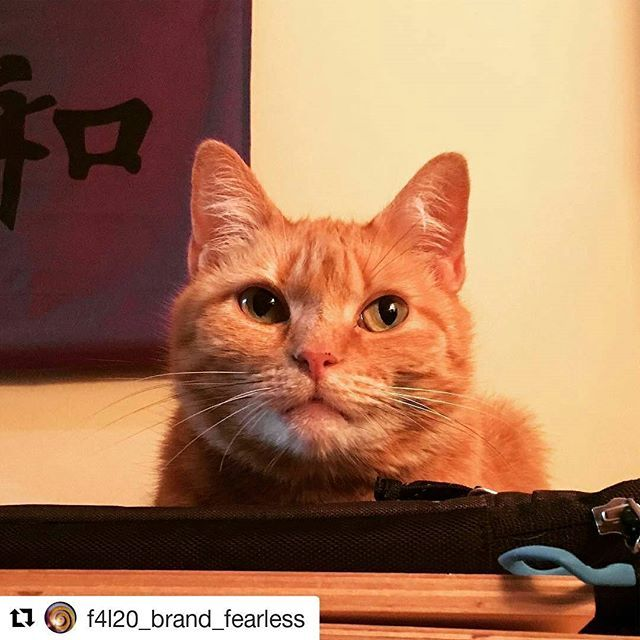 """""""#Repost @f4l20_brand_fearless (@get_repost) ・・・ Good morning beautiful Wu Healing friends. Are you coming to my event in West Hartford, CT on July 8th at the Wu Healing Center? Let me know. It's from 2-3. Here's the rest of the details from the FB event page. 🐱Please join us for a fun packed hour in West Hartford, CT at the Wu Healing Center as we celebrate Wu Kitty's journey from a Manhattan ACC death row semi-feral in April of 2013 to the book star and online mascot she is today. As they…"""