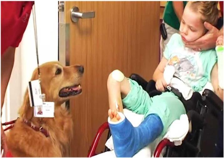 Observa cómo mejoró esté niño con la terapia asistida con animales