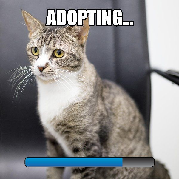 Still thinking of adopting? Make a move today and find me! Adult cats at your local RSPCA Queensland shelters are just $50 to adopt until June 19. http://www.rspcaqld.org.au/adopt RSPCAQLD #AdoptMeow #Cat #Gamer #PlayWithMe