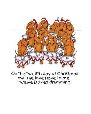 =)12 Doxie, Doxie Drums, Dachshund Dachshund, Butt Doxie, Dachshund Dog Doxie, Dogs Humor, Http Dachshund, Dachsie Drums, Doxie Darlin