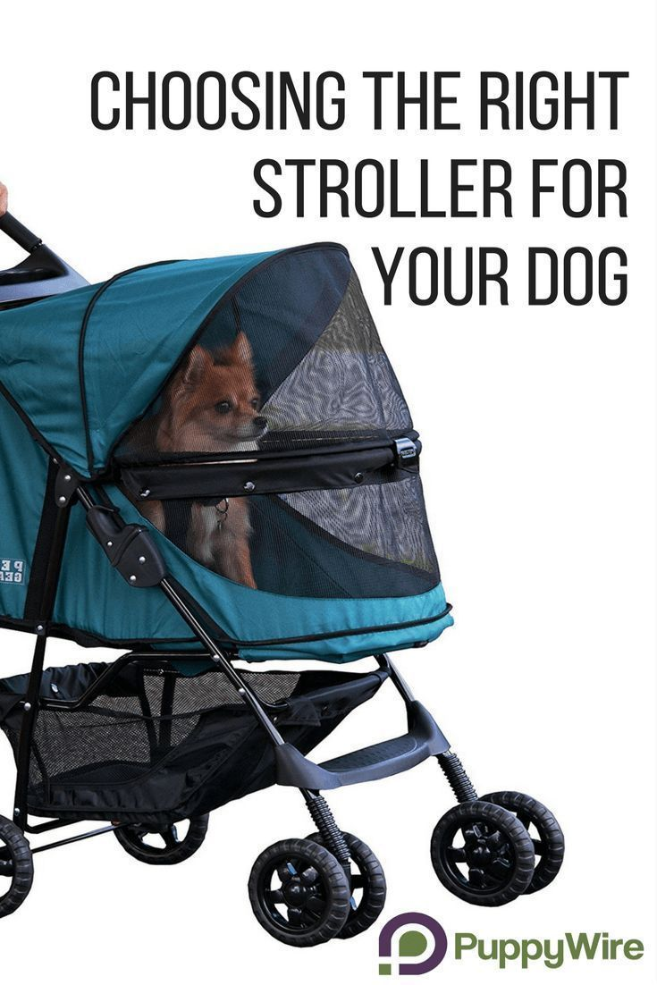 Find the best stroller for large and small dogs, best jogging dog stroller, double dog stroller, and even dog stroller bike trailers. Click through to see our top 5 picks and important information before accidentally buying the wrong one for your dog. #Do