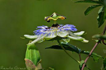 conta i fiori del tuo giardino, mai le foglie che cadono. R.Battaglia foto di Renato Greco