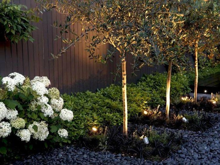 plantes d'ombres hortenisias blanches et éclairage extérieur