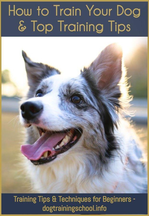 How To Keep Dog Diapers On Dog Training Near Me Petsmart Dog