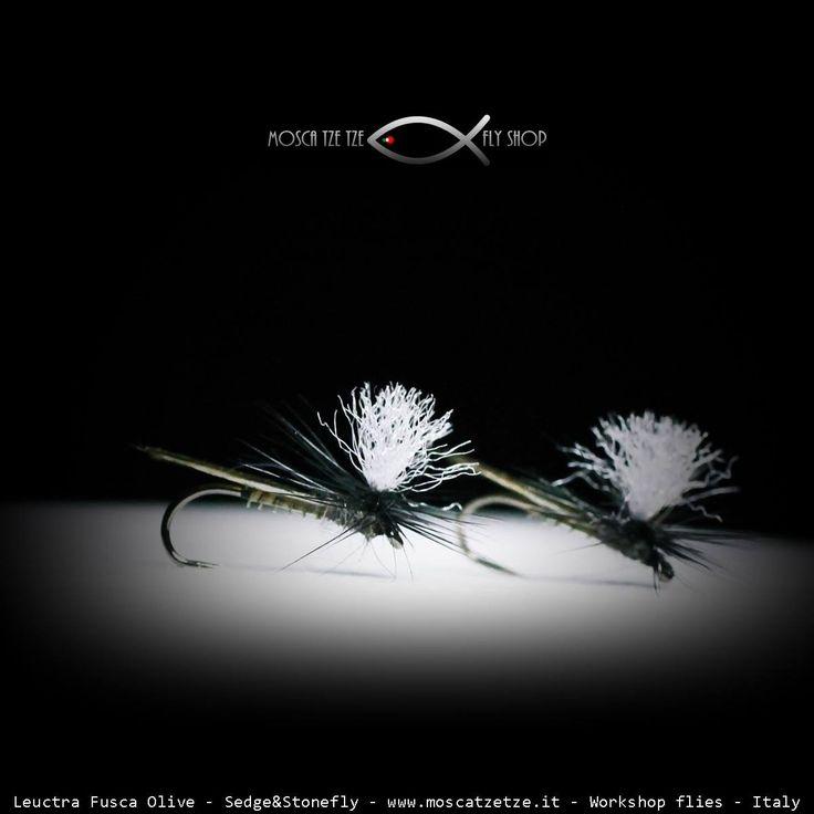 Leuctra Fusca Olive – Moscatzetze.com