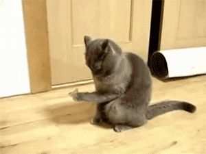 cat does not know what to do with a butterfly that landed on its paw...