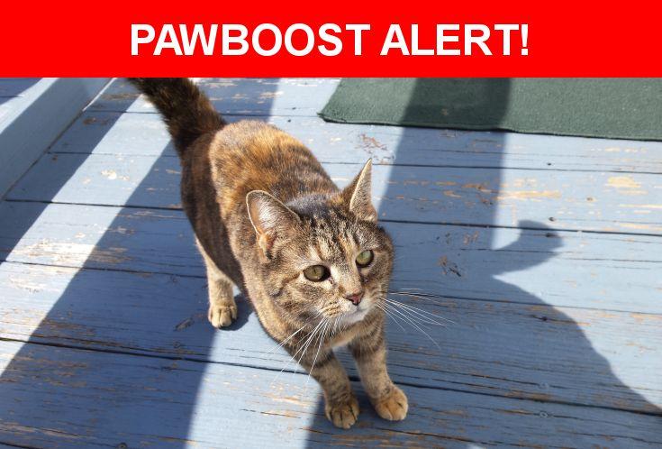 Please spread the word! Lost Pet Unknow was last seen in McElhattan, PA 17748.    Nearest Address: Near South Rd & North Rd