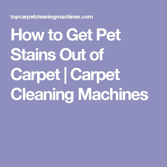 How to Get Pet Stains Out of Carpet | Carpet Cleaning Machines