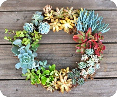 DIY Succulents: Ideas, Craft, Outdoor, Succulent Wreath, Delicious, Diy, Garden, Wreaths