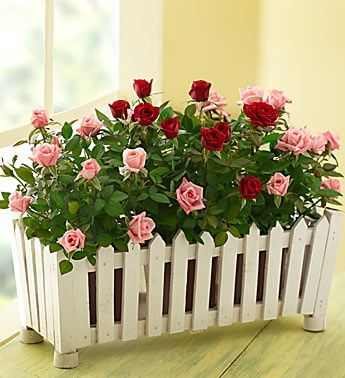 Picket fence planter - This is what I want for Valentines Day!