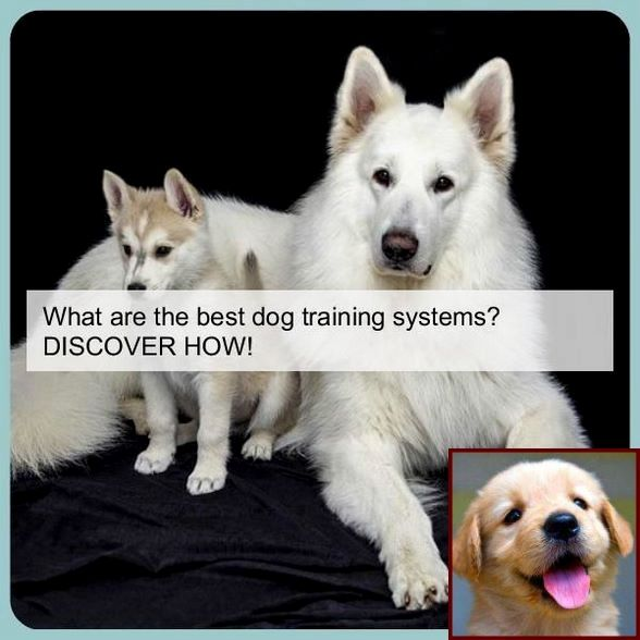 1 Have Dog Behavior Problems Learn About Dog Behavior Peeing And