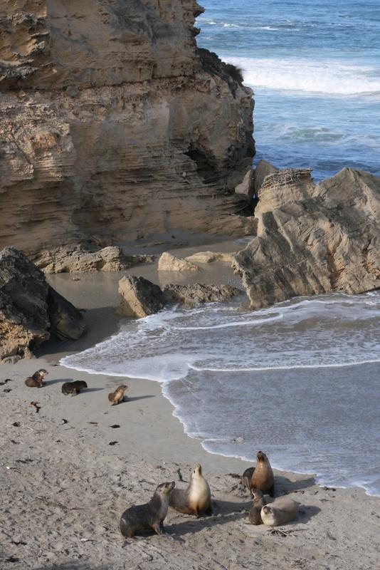 Seal Bay, Kangaroo Island http://www.bloggerme.com.au/states/murray-basin-foreshore Australia