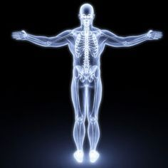 science: human anatomy - free interactive lessons