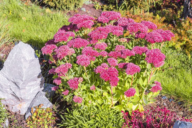 502 best Jardim images on Pinterest Garden, Plants and Gardening - gartenpflanzen winterhart immergrun