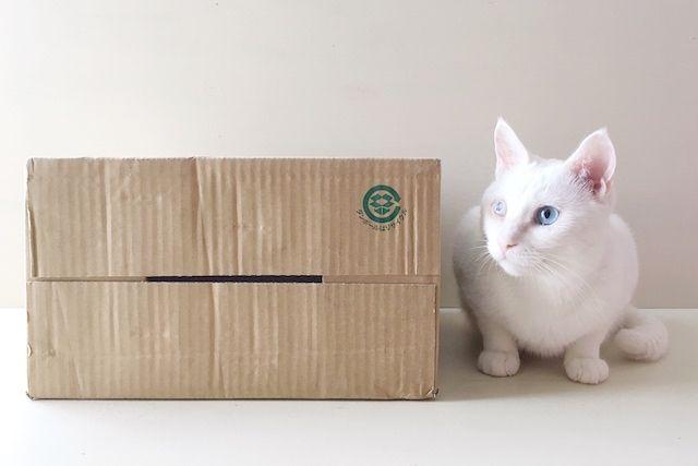 猫用防災グッズdiy とっさの避難時に 段ボール箱で作る猫トイレとペットキャリー Chintai情報局 猫 トイレ ペットキャリー 段ボール