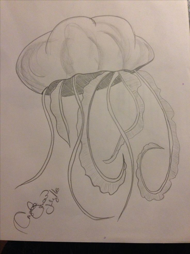 Pencil drawing squid