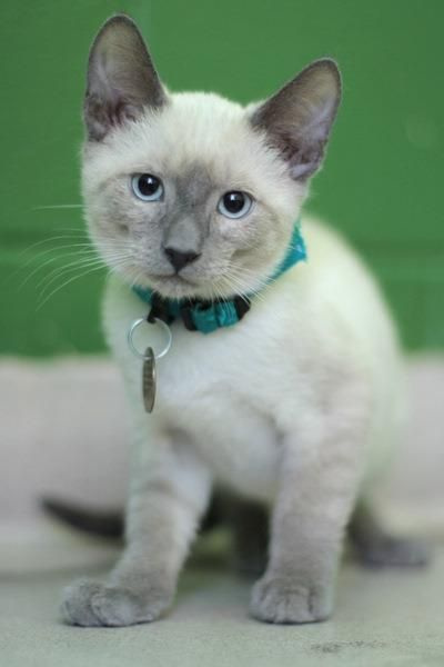 Adopt a Pet - Dogs and Cats available at Oakland or Dublin SPCA