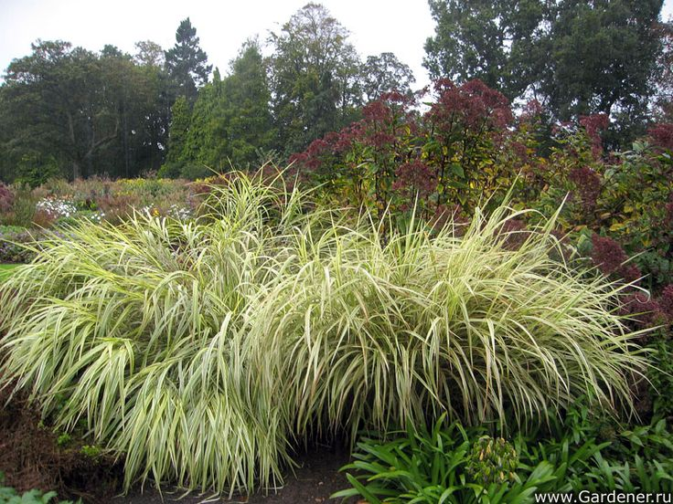 The Bressingham Gardens | Ландшафтный дизайн садов и парков