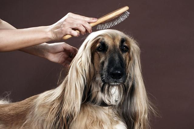 Learn about dog grooming supplies and dog grooming equipment needed for proper…