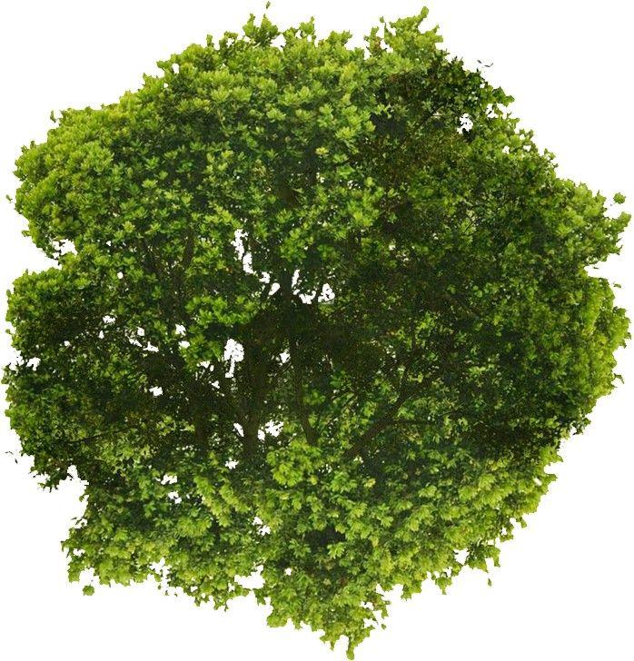Architextures Seamless Textures For Architectural Visualisations Tree Photoshop Tree Plan Photoshop Photoshop Landscape