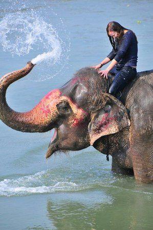 chitwan national park Nepal. A bath with the elephants