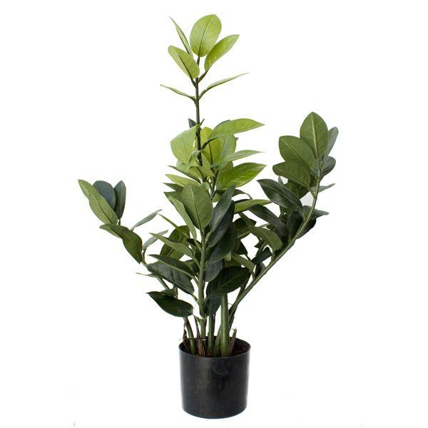 Les 25 meilleures id es de la cat gorie plante for Plante artificielle exterieur