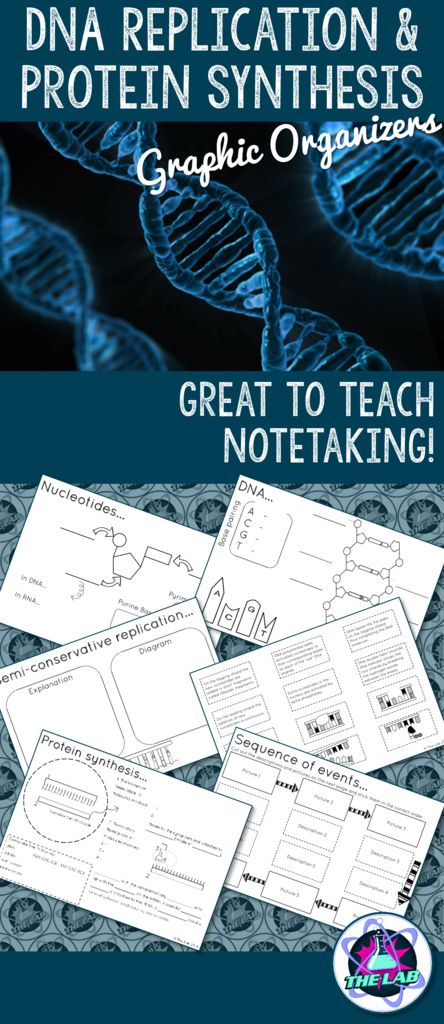 Graphic organizers on DNA replication & Protein synthesis. Great to teach notetaking!