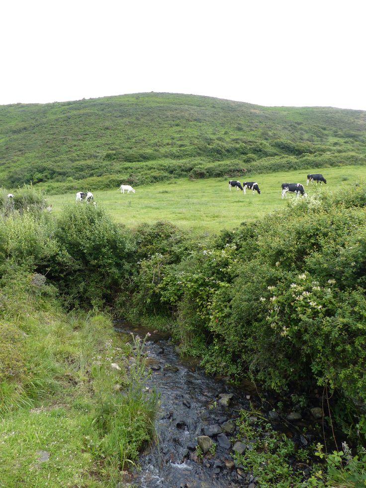vue sur les terres du Cotentin