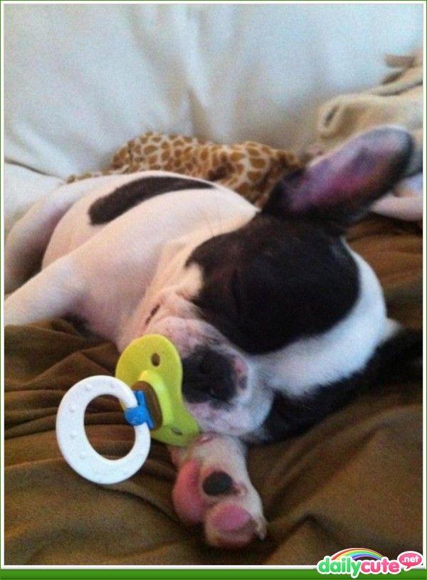Dogs Fun, Peace Sleep, Sleepy Time, Animal Baby, English Bulldogs, Baby Animal, Baby Sleep, Baby Dogs, Boston Terriers