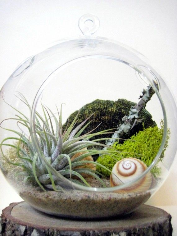Everything in Sea and Asters' shop is lovely! Spiral Air Plant Terrarium by seaandasters on Etsy, $25.00